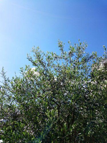 芽吹いた緑がだんだん鮮やかになっていく季節!