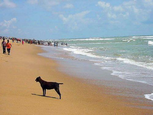 モンスーン終わり頃のPuriの海岸。もうずっと前だけど。