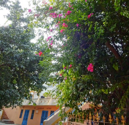 この木の下、好きだなぁ。 アーシュラムの石段を上ったらまずここ。