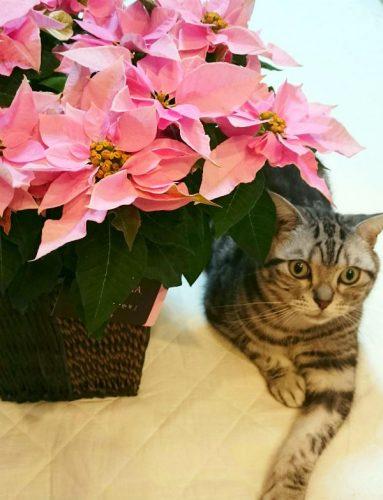 「プリンセチア」とあられ。お似合いだと思うけど、猫親バカかな。