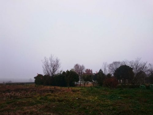 霧に包まれて別世界みたい。こんなクリスマス前もあるなんて・・ 今津にて