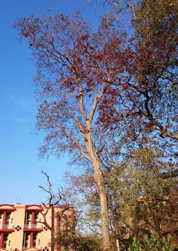 空と木々を見上げながら歩いていたなぁ。両サイドにはお猿がいる・・(もちろんカメラは向けない)